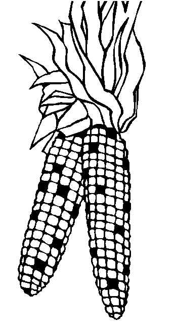 corn stalks coloring pages - photo#24