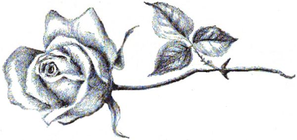 Single stem rose tattoo the image kid for Long stem rose tattoo