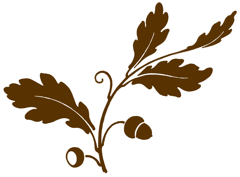 Oak Leaf And Acorn Drawing Antique Clip Art - Oak Leaf