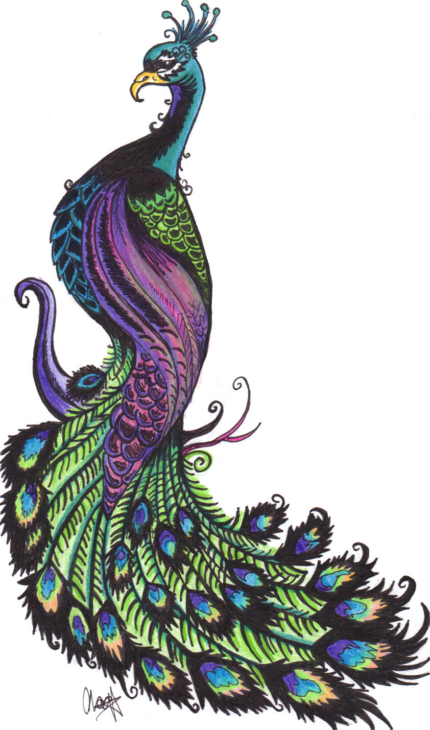 Simple colorful peacock drawing - photo#14
