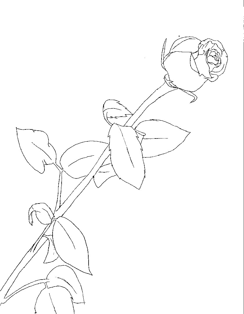 Line Art Of Rose : Line drawing of rose cliparts
