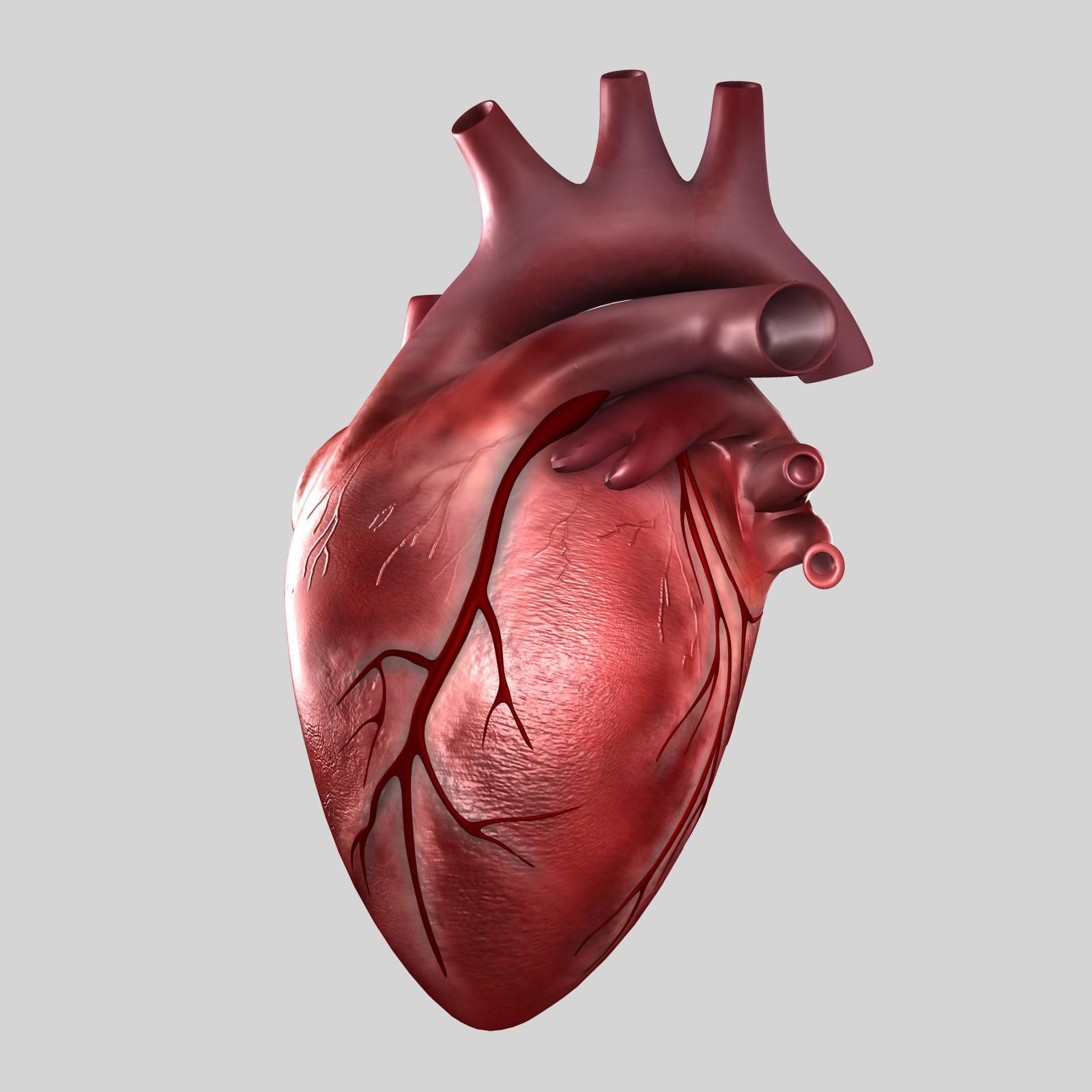 Real human heart images - photo#8
