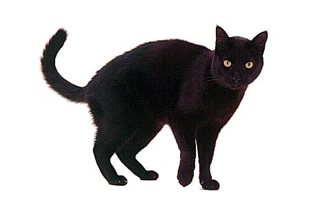 Free Black Cat Clip Art - Cliparts.co
