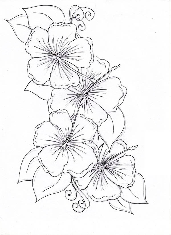 Hibiscus Flower Line Drawing : Flowers drawing pages cliparts