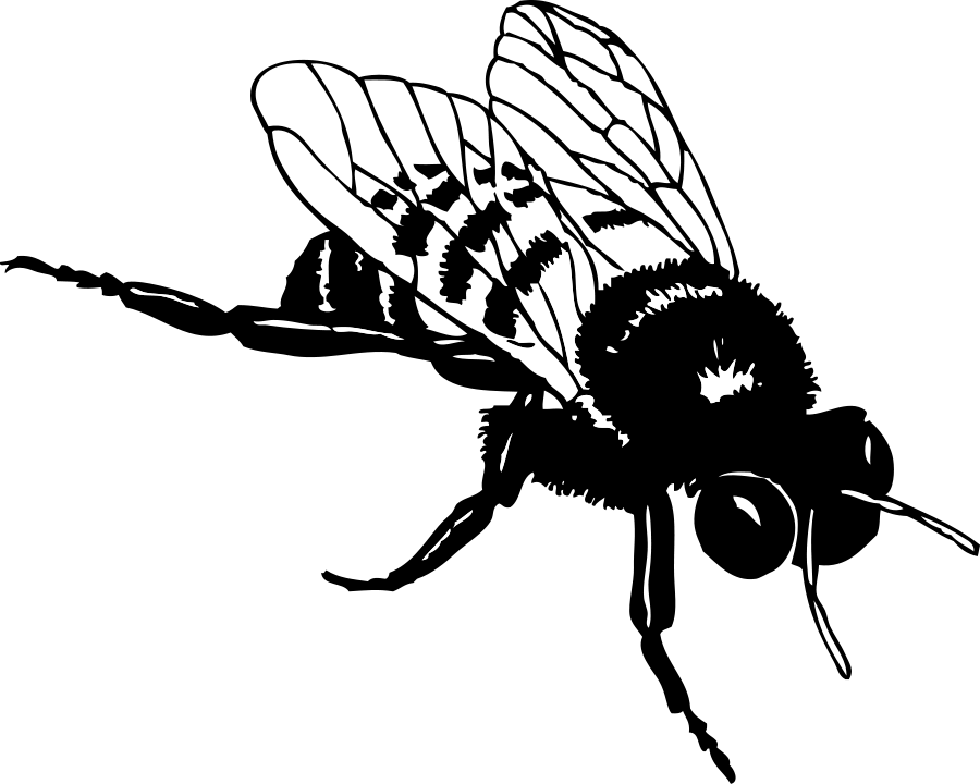 Line Drawing Bee : Bee line art cliparts
