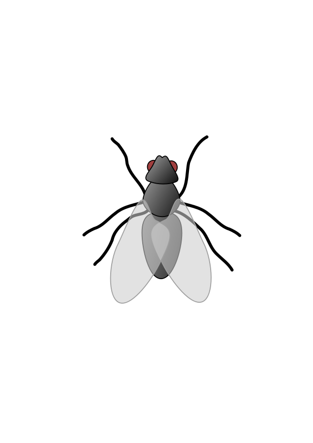 animated fly clipart - photo #29