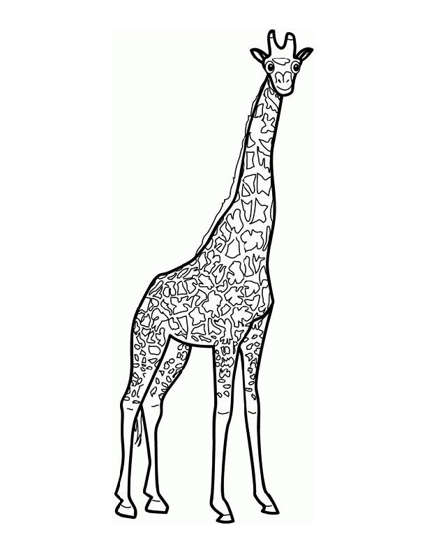 Line Art Giraffe : Giraffe line art cliparts
