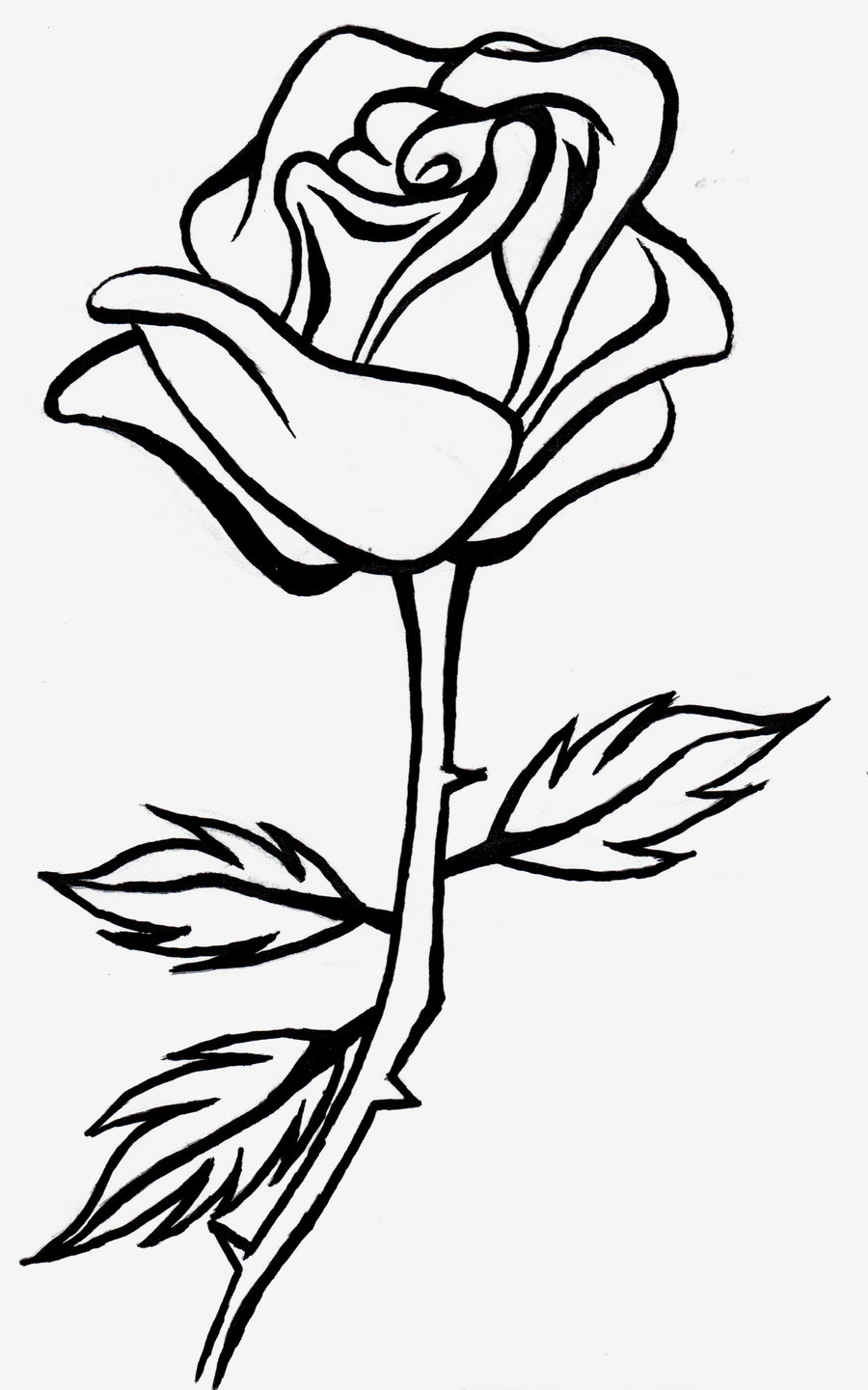 Line Drawing Of Rose Plant : Line drawing rose cliparts