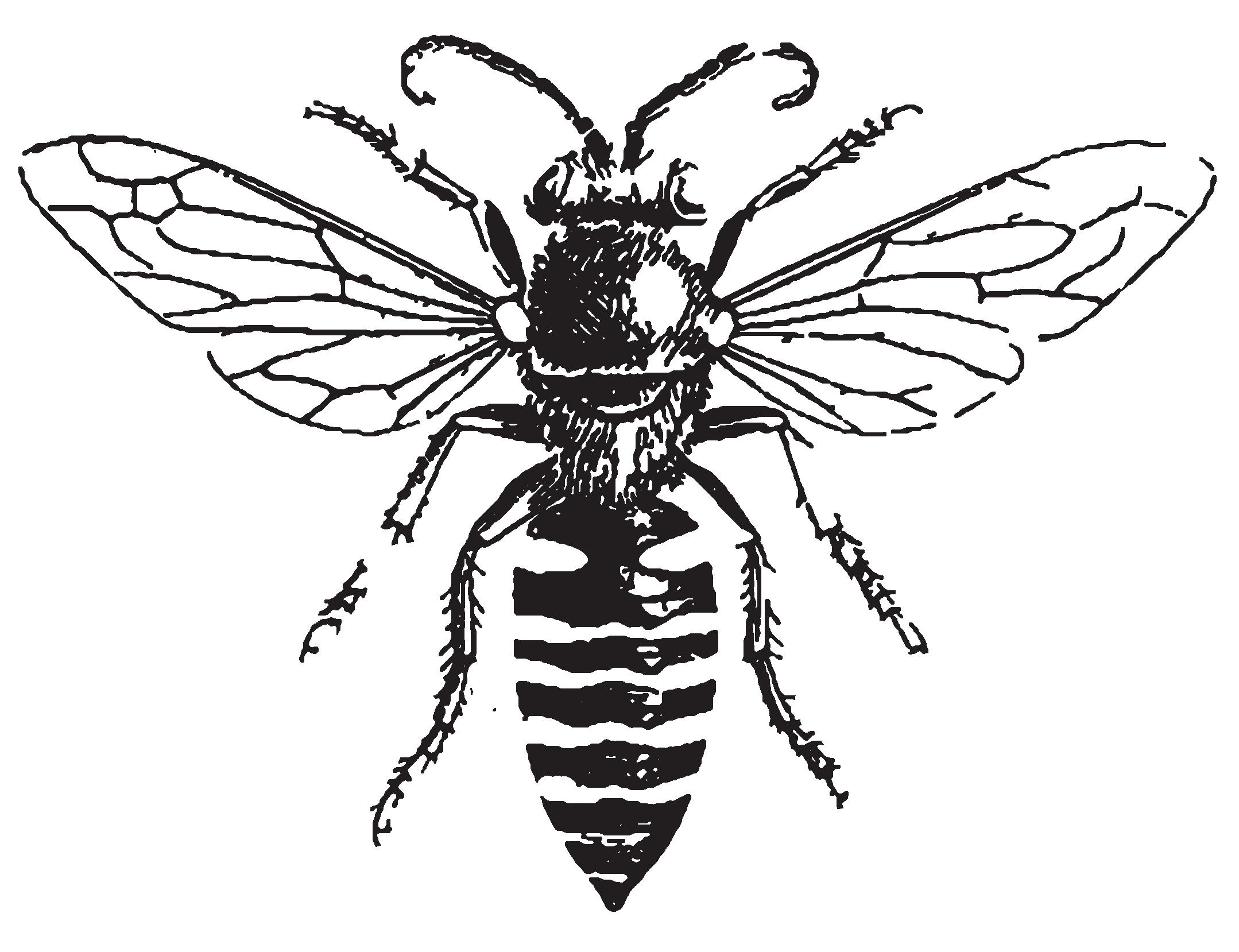 Dance of the Honey Bee...