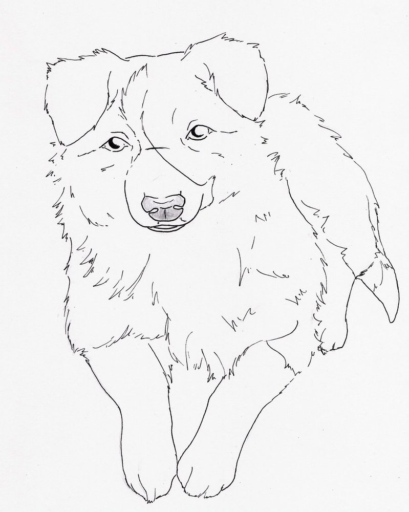 border collie outline cliparts co Border Collie Coloring Page Sheets  Border Collie Puppy Coloring Pages