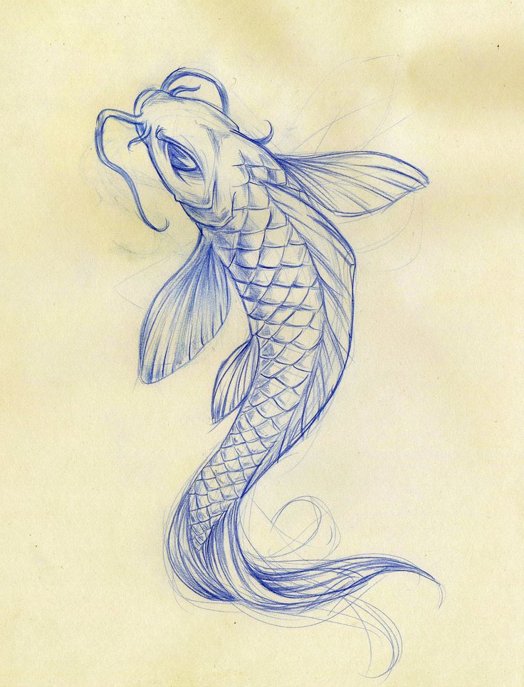 Koi fish drawing on pinterest koi art koi painting and for Koi japanese art