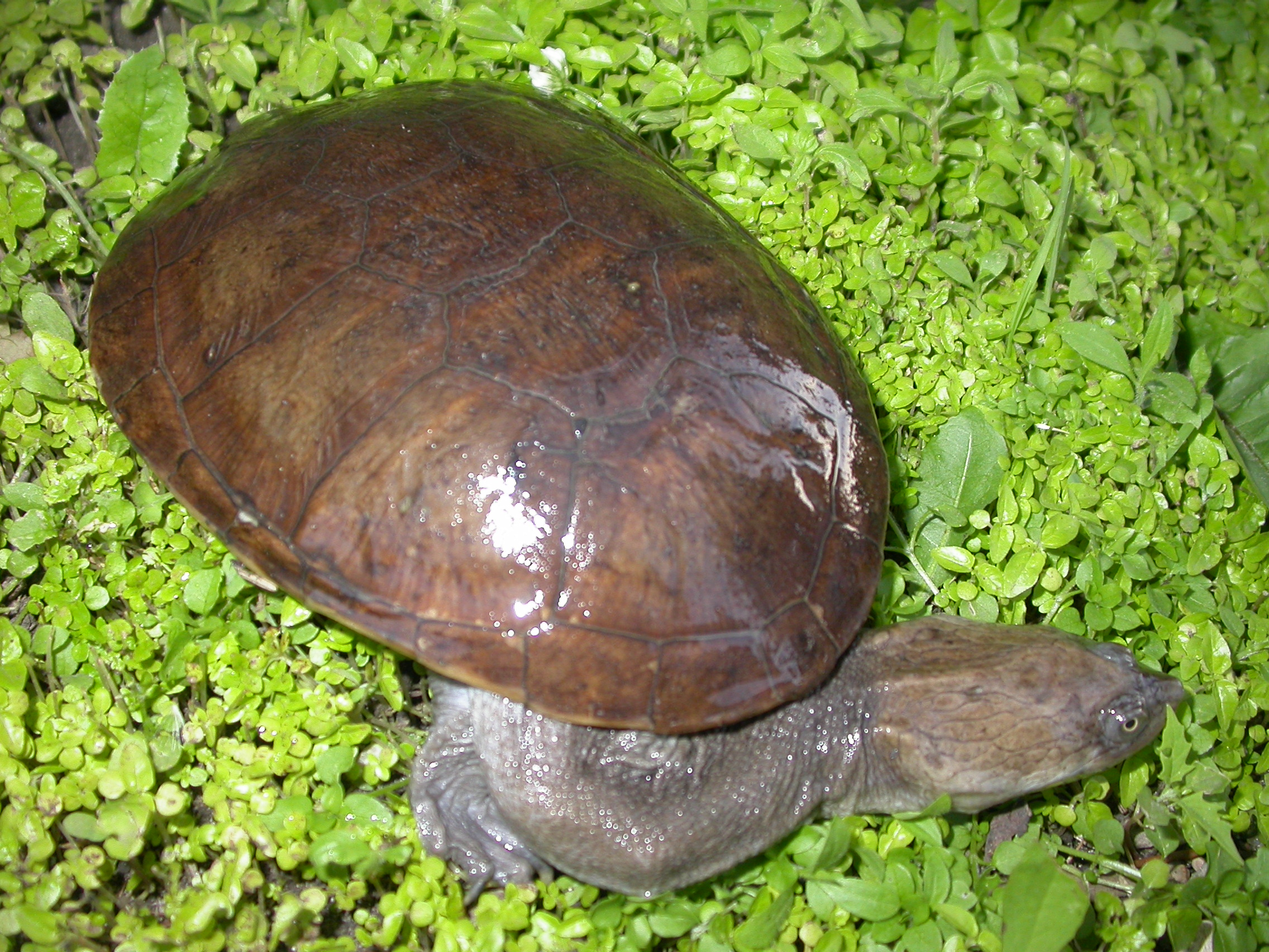 Turtles & Tortoises | Reptile & Amphibian Discovery Zoo