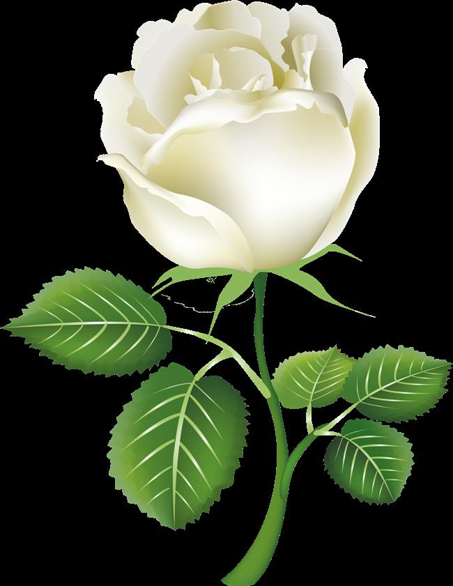 images of animated white roses - photo #30