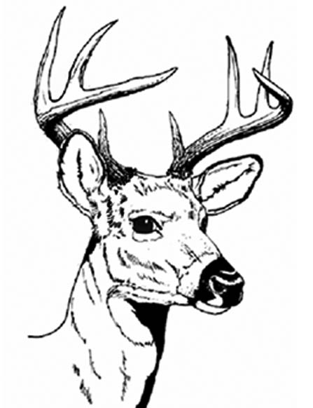 Deer Head Clipart | Kavalabeauty