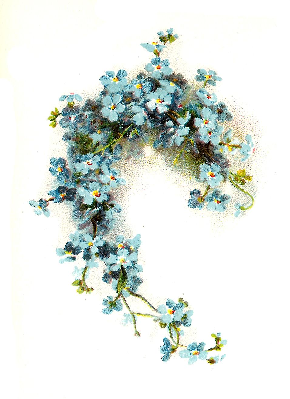 Antique Images: Free Flower Clip Art: Blue Forget-Me-Not Flower ...