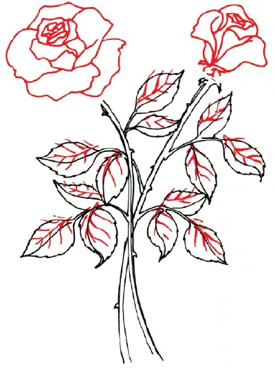 Line Drawing Of Rose Plant : Flower stem template cliparts