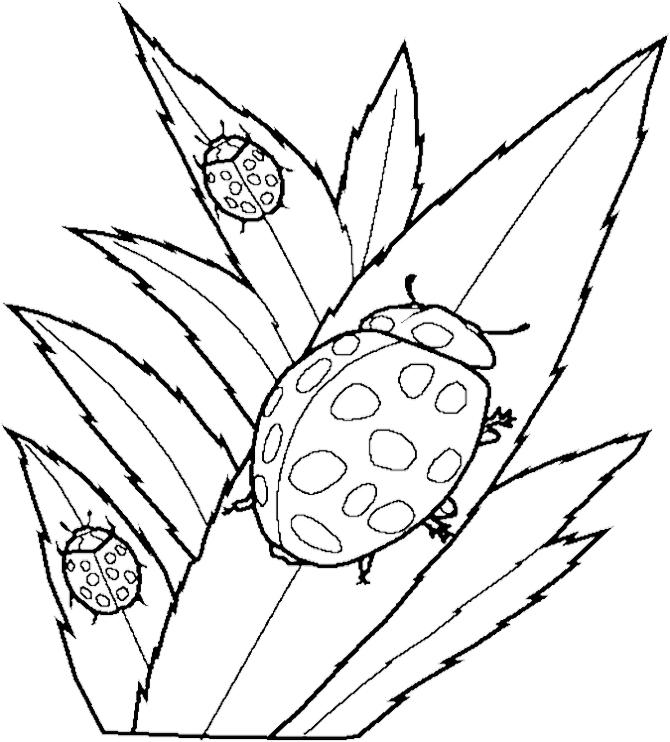 flying ladybugs coloring pages - photo#7