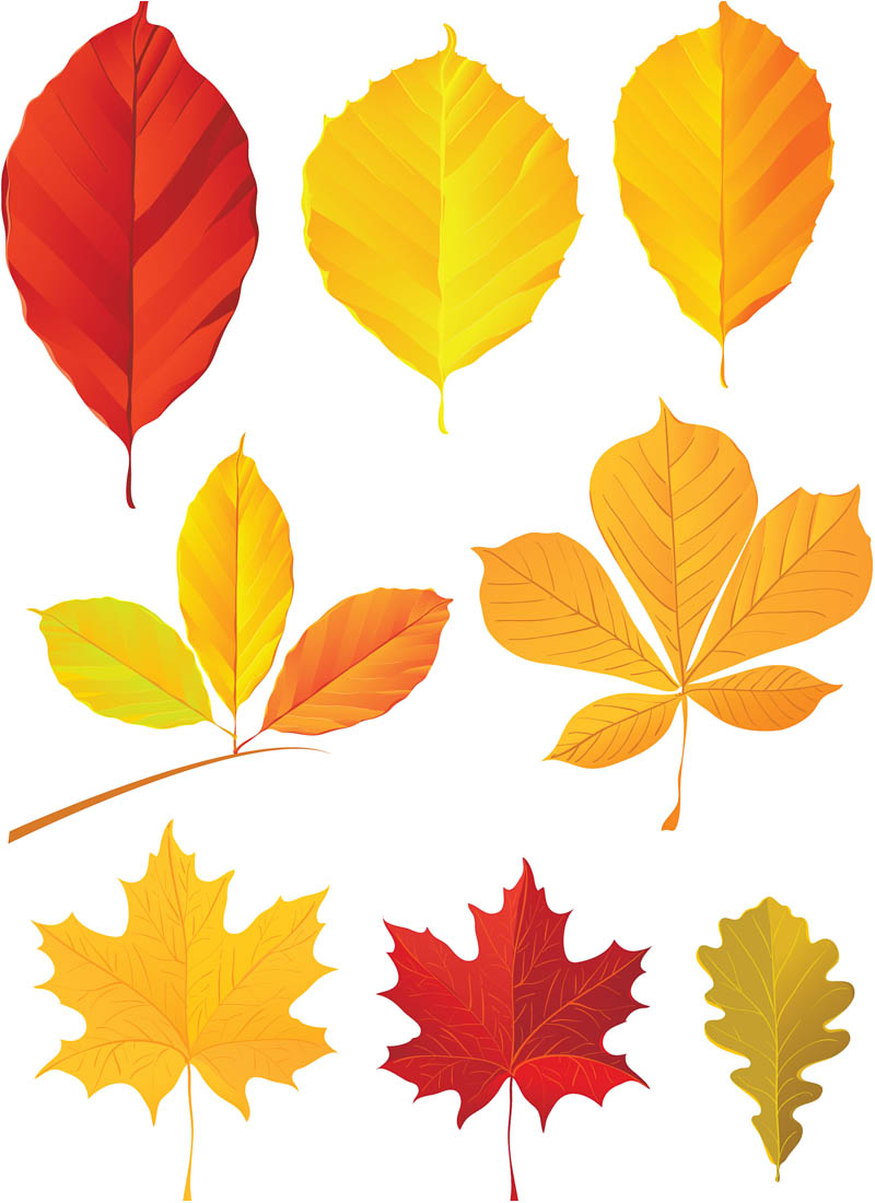 free clip art for fall leaves - photo #32