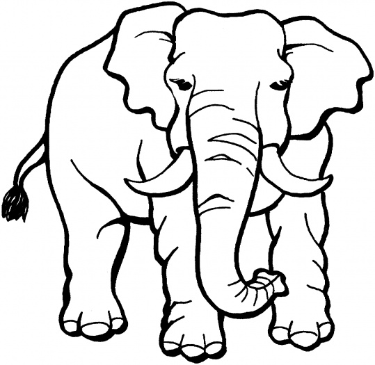 Safari Animals Coloring Pages: Free Animal Pictures To Print