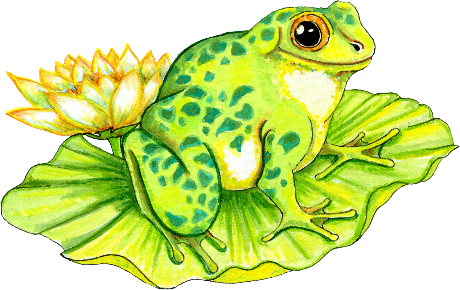 Pictures Of Frogs On Lily Pads - Cliparts.co