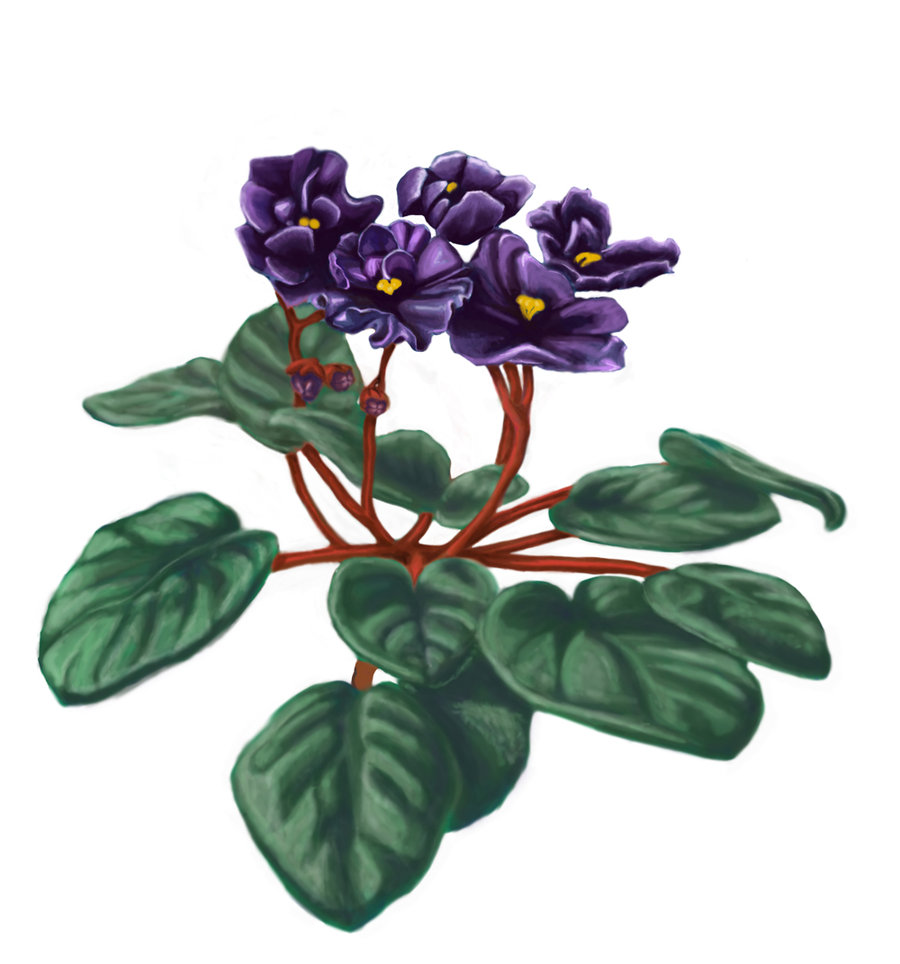 African Violet Tattoo Cliparts Co