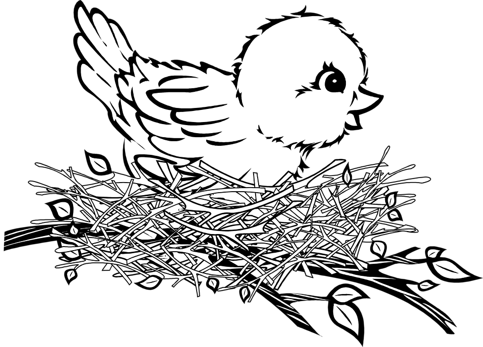 baby birds in a nest coloring pages - photo #20
