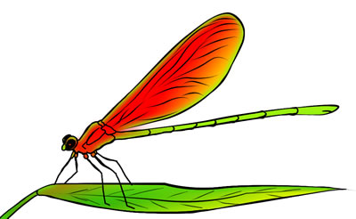 50 FREE Dragonfly Clip Art Drawings and Colorful Images