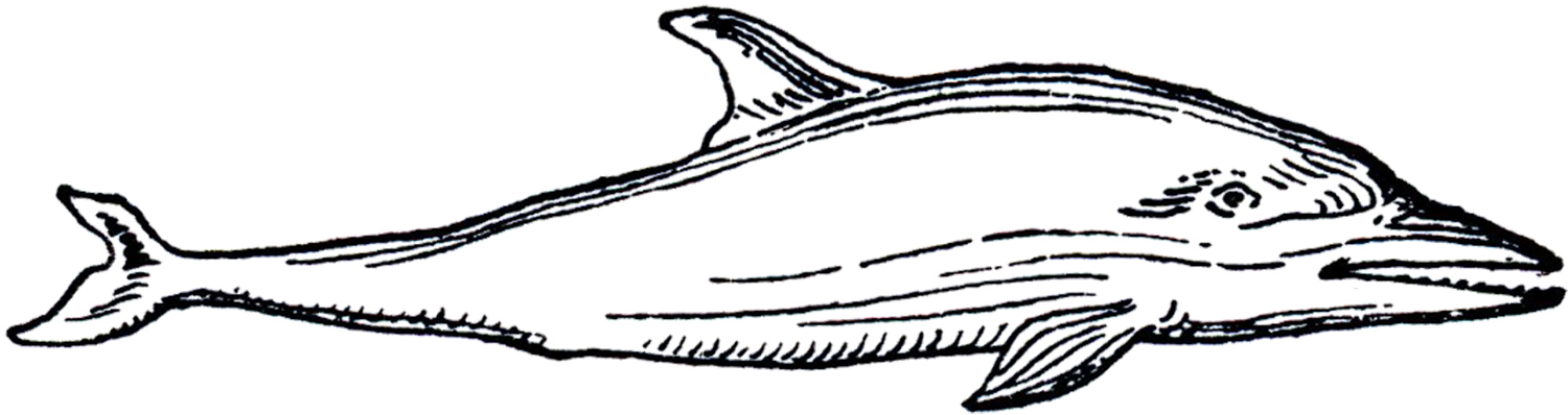 Line Drawing Dolphin : Black and white dolphin pictures cliparts