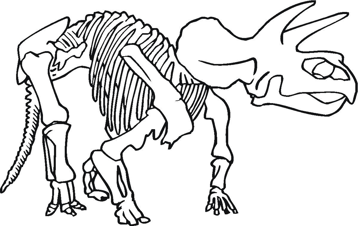 skletal fossil coloring pages-#17