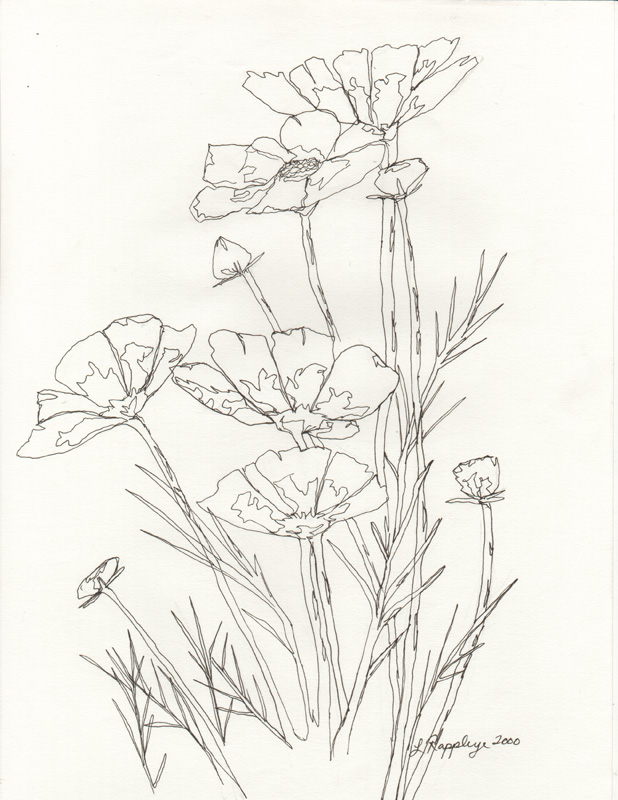 Basic Flower Line Drawing : Flower line drawing cliparts