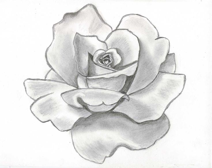 Flower Drawing Cliparts Co