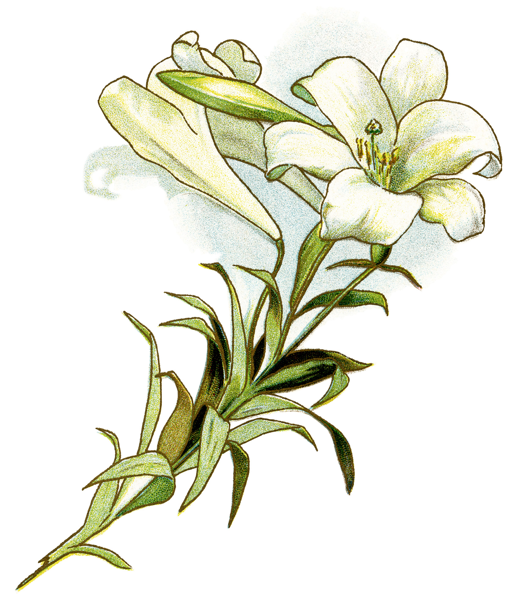 easter lilies free clipart - photo #5