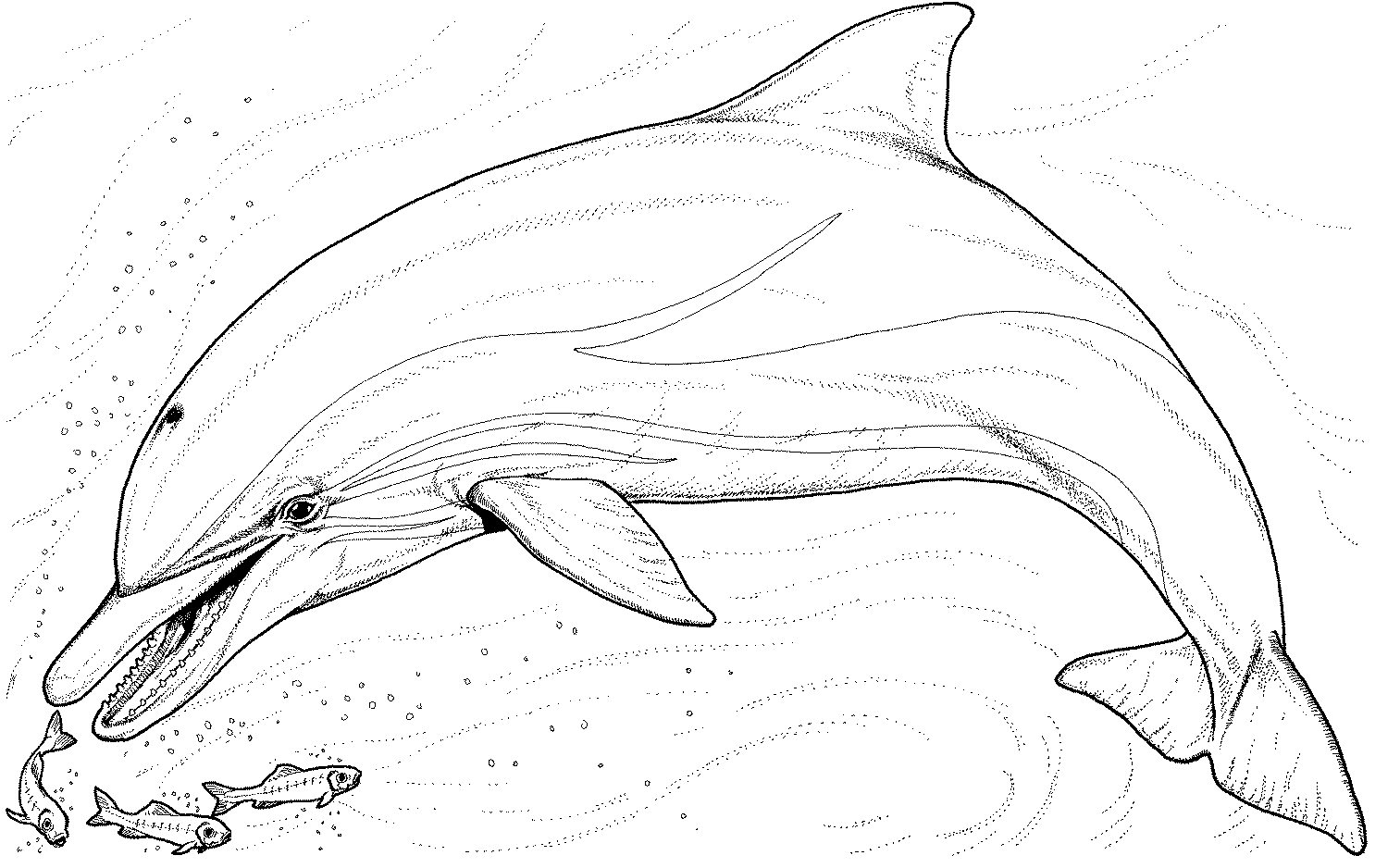 dolphin tale printable coloring pages - photo#27
