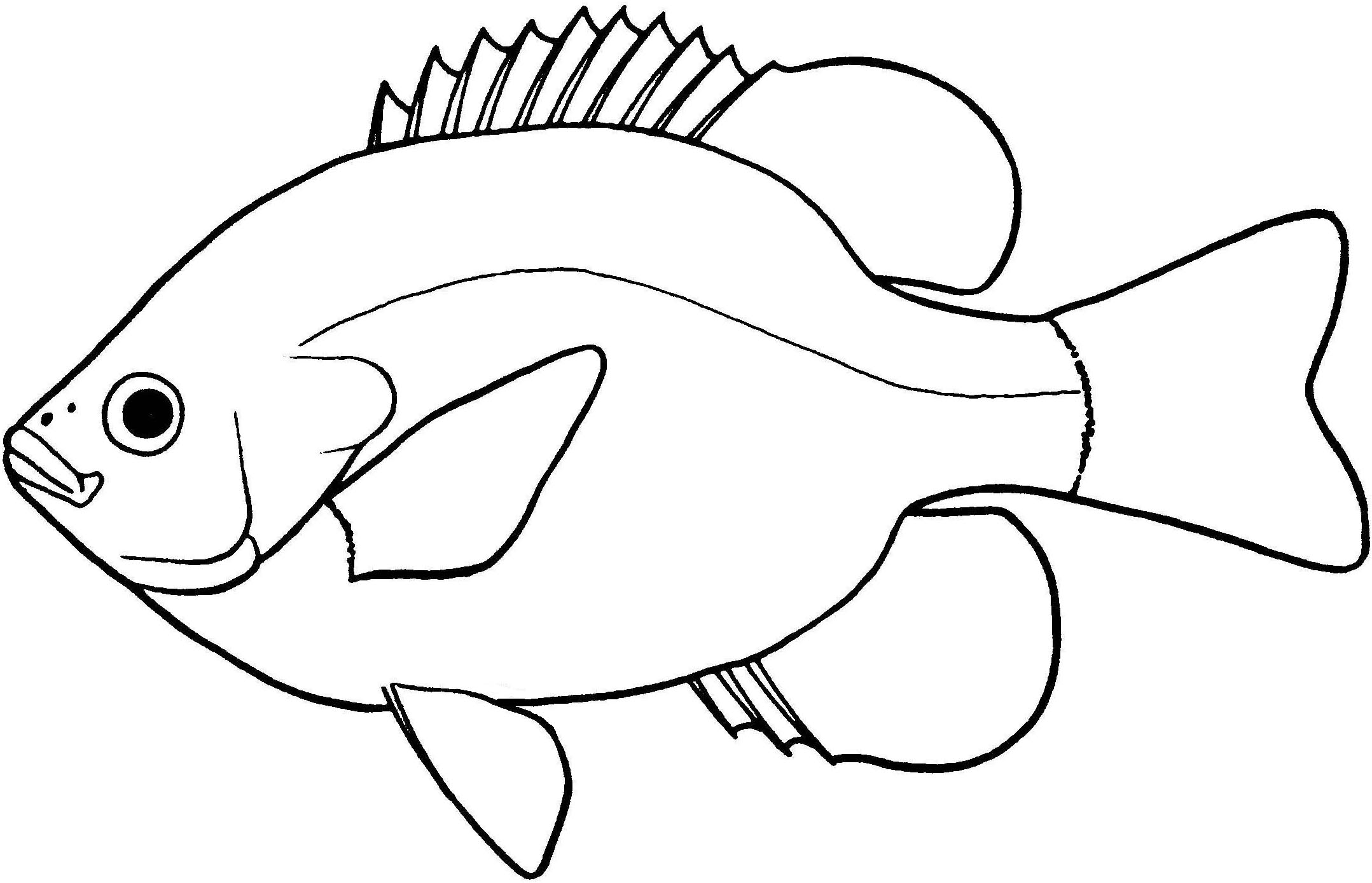 Line Drawing Of Fish : Largemouth bass fish outline sketch coloring page