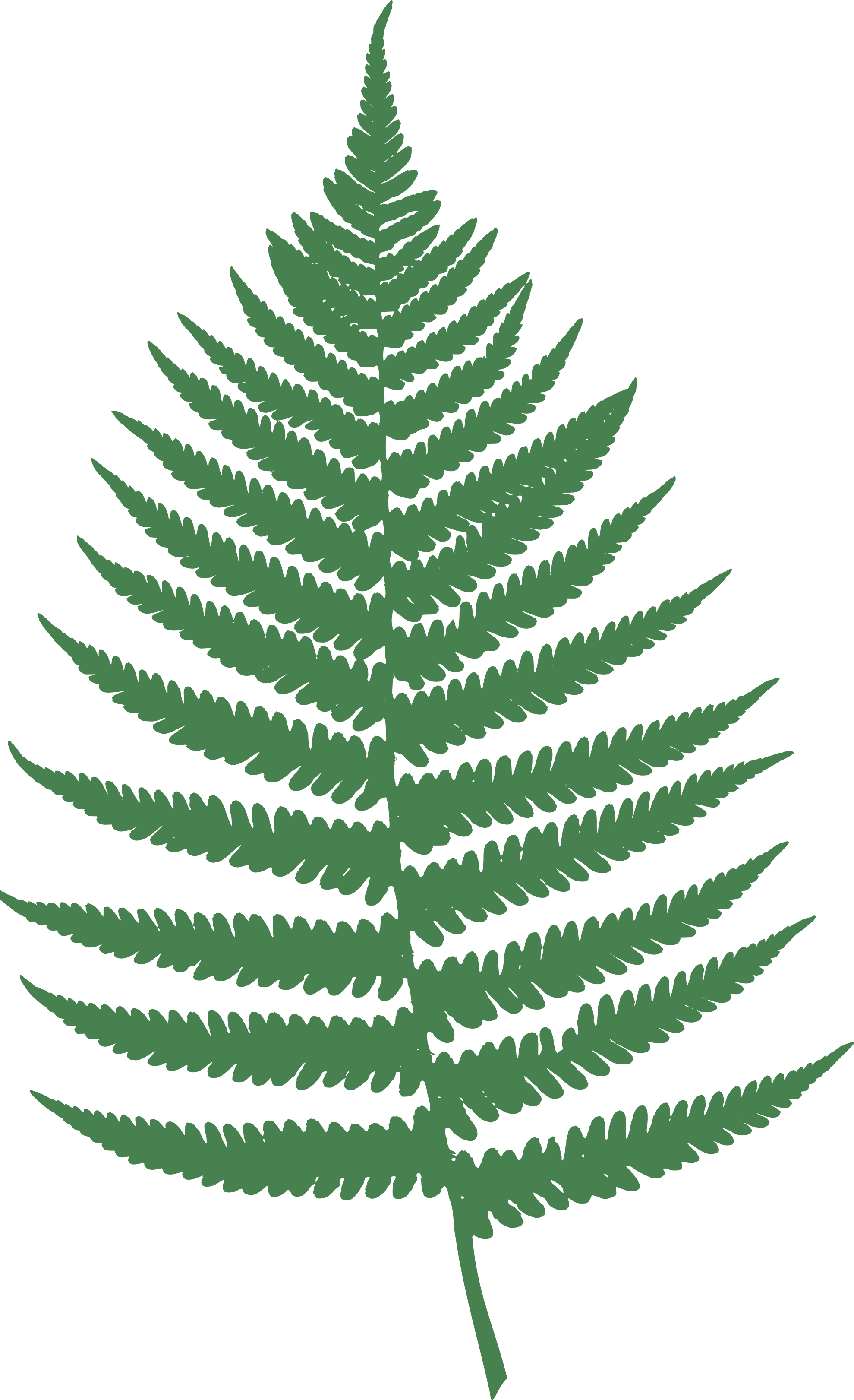 clipartist.net » Clip Art » farn fern Julio 2012 SVG
