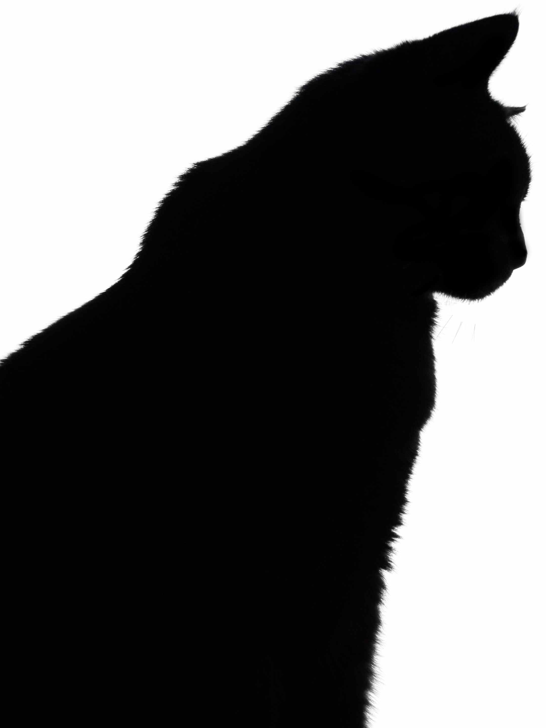 Cat Silhouette Pictures - Cliparts.co