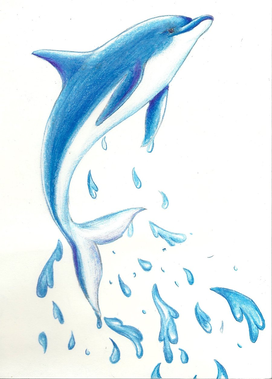 Bottlenose Dolphin Drawing - Gallery - Cliparts.co