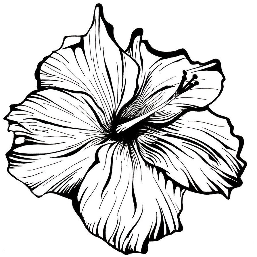Line Drawing Of Flowers : Flower line drawing cliparts