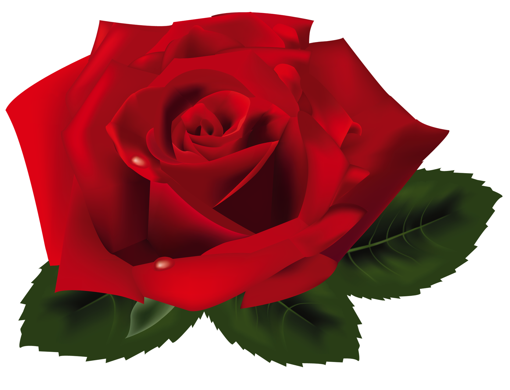 red roses clipart - photo #8