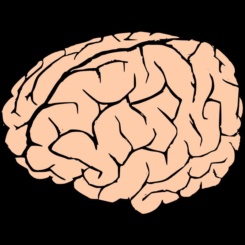 clip art brain clipartsco