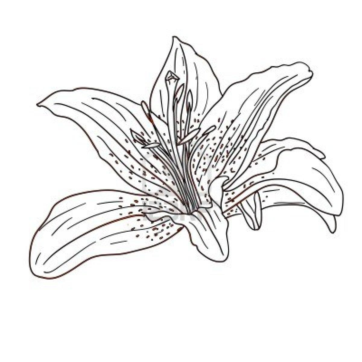 Tropical Flower Drawings Cliparts Co