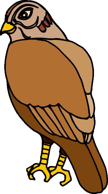 Clip Art Hawk - Cliparts.co