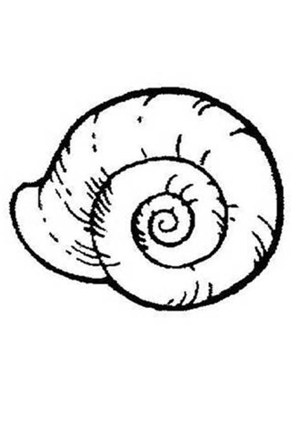 snail coloring pages animals - photo#34