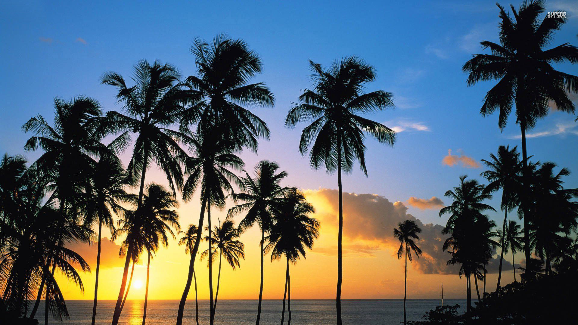 Palm Trees Tumblr Vertical Tree Beach Sunset Wallpaper Free Desktop