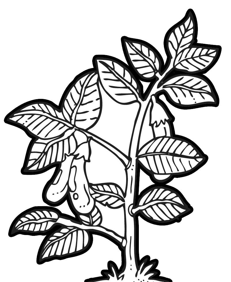 Eggplant Clip Art - Cliparts.co
