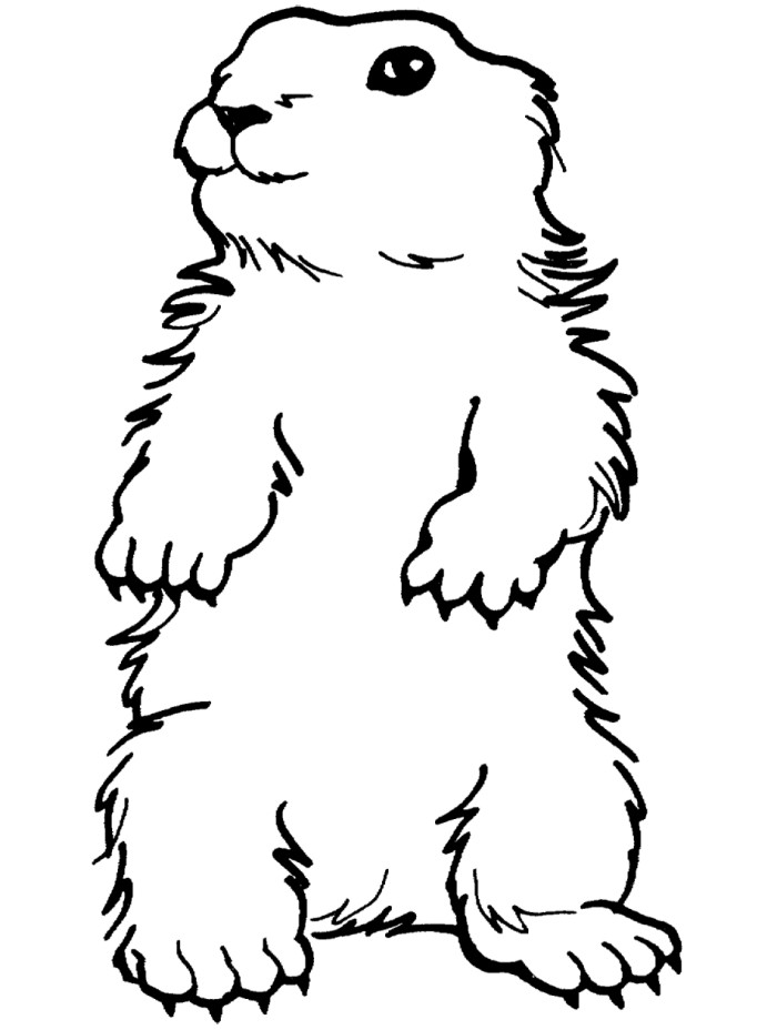 Cartoon Groundhog Pictures Cliparts Co Ground Hog Coloring Page