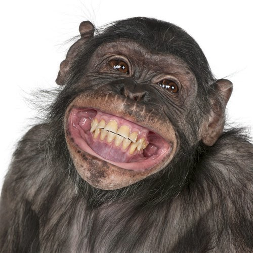 Quotes About Smiling Monkey Face - Cliparts...