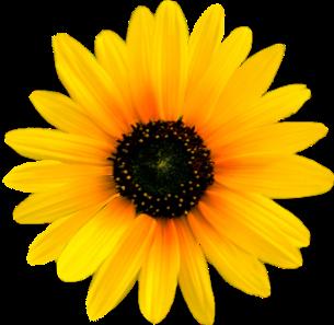 flower high resolution clipart rh worldartsme com high resolution clipart free high res clipart