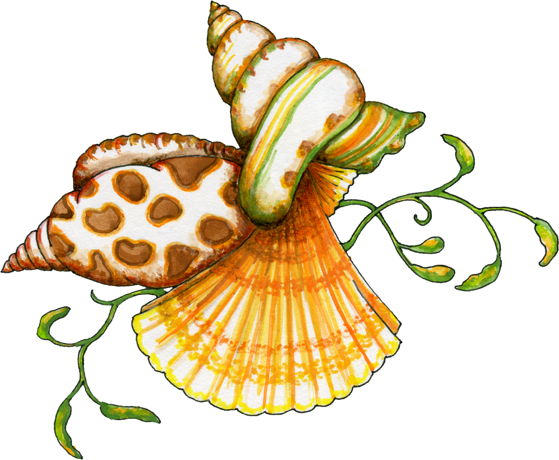 Free Sea Shells Graphic - Transparent PNG files and Paint Shop Pro ...