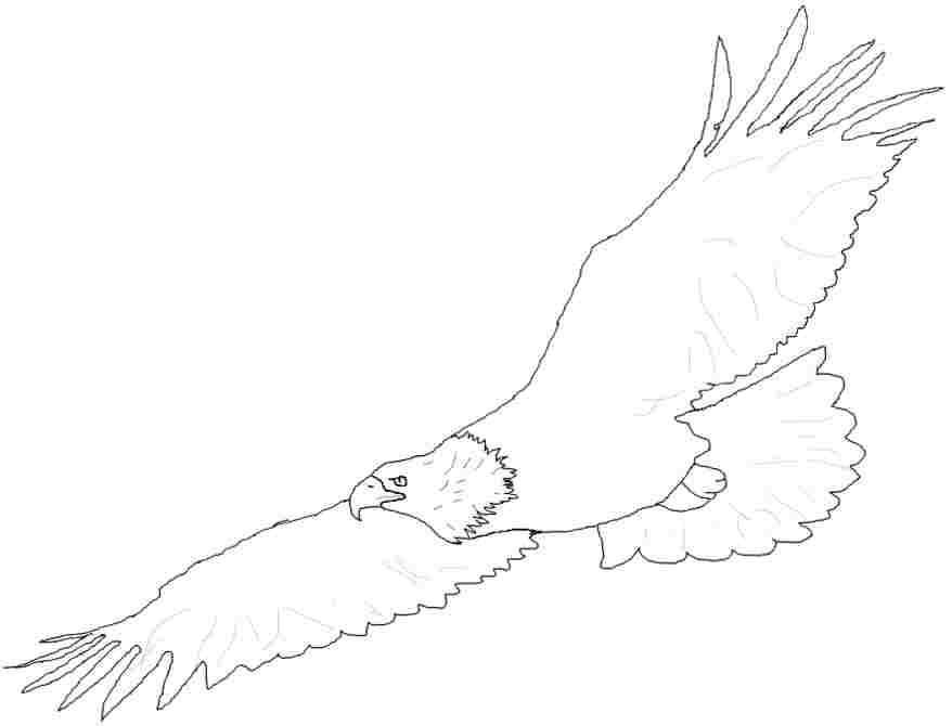 Soaring Eagle Coloring Page bigking keywords and pictures